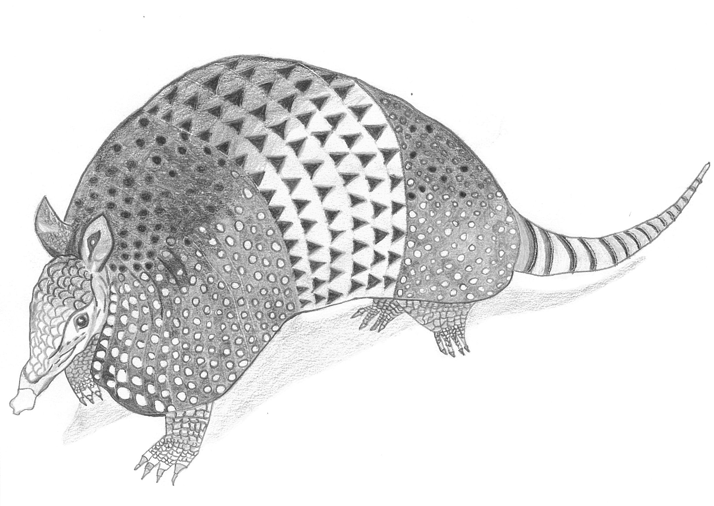armadillo drawing armadillo drawing graphite by laura sabransky art pens drawing armadillo