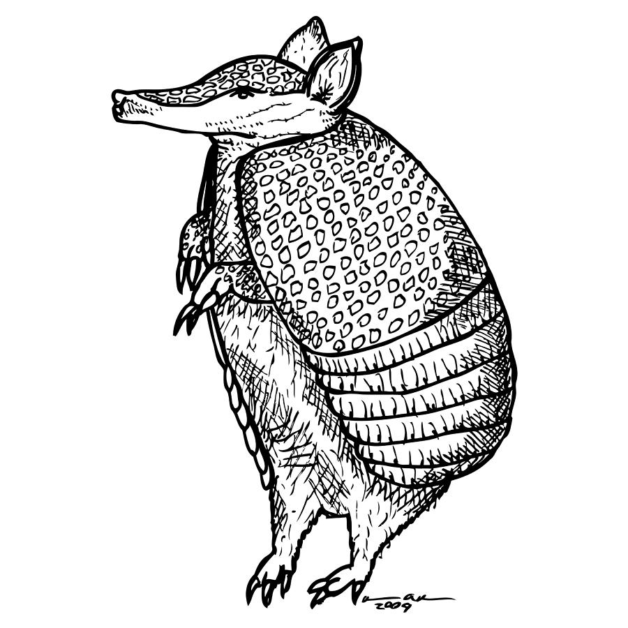 armadillo drawing armadillo ferrebeekeeper drawing armadillo