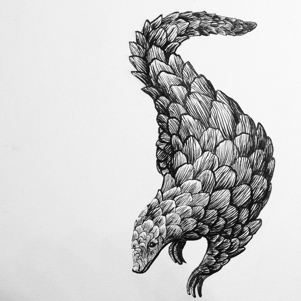 armadillo drawing armadillo sketch by cartoonsbykristopher on deviantart drawing armadillo