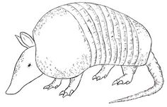 armadillo drawing free armadillo clip art image black and white cartoon armadillo drawing