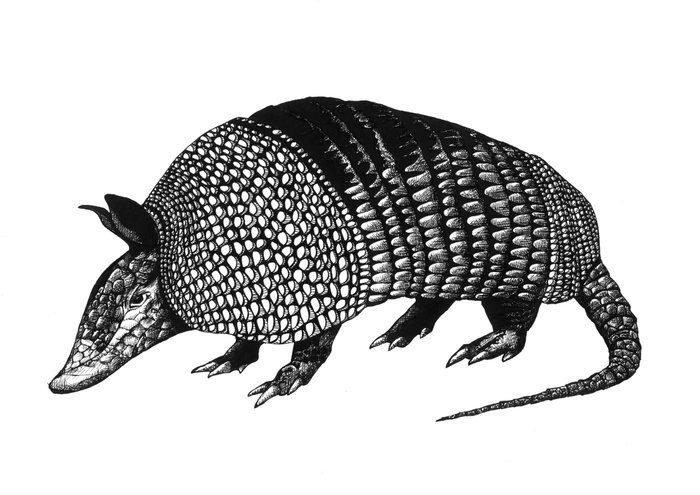 armadillo drawing hachakyum the armadillo abstract face art armadillo drawing armadillo