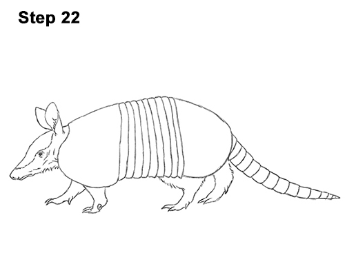 armadillo drawing pangolintexturestudyininkbyflorencechan d9c0nfhjpg drawing armadillo
