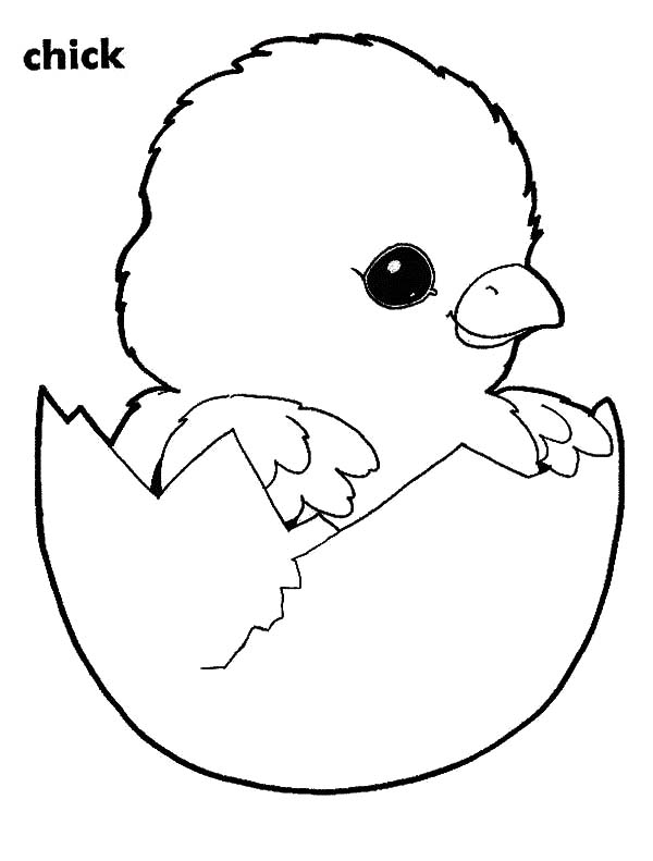 baby chick coloring page baby chick coloring pages download and print baby chick chick page baby coloring