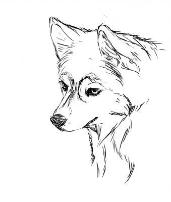 baby husky coloring pages husky drawing puppy coloring pages husky drawing dog pages baby coloring husky