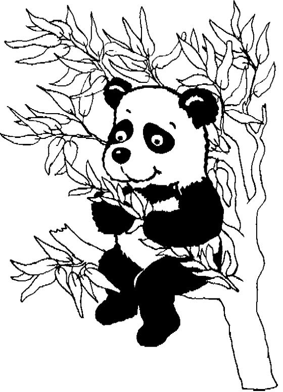 baby panda coloring sheet 1339 best images animaux images on pinterest smileys sheet coloring panda baby
