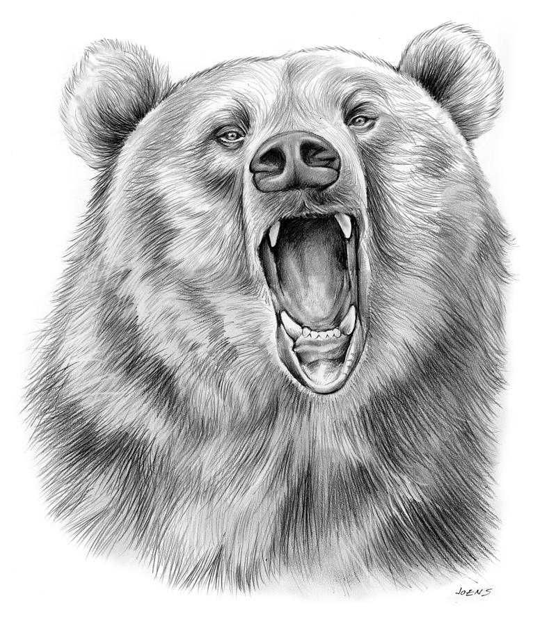 bear face drawing bear face drawing wallpapers gallery drawing bear face