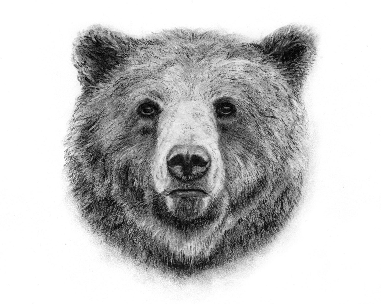 Bear face drawing