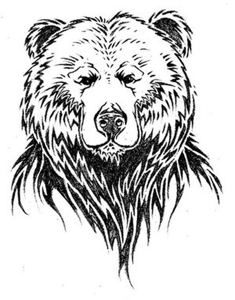 bear face drawing bear head hand drawn engravings download free vectors drawing face bear