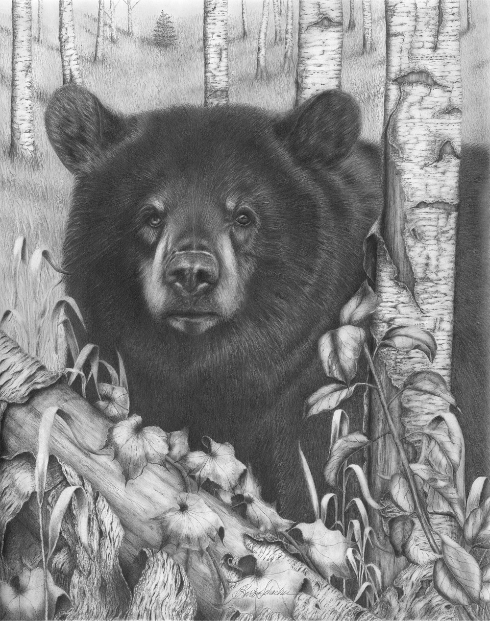 bear face drawing bear tattoo design Татуировки медведя Изображения bear face drawing