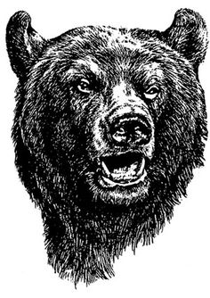 bear face drawing grizzly bear face drawing at paintingvalleycom explore bear face drawing