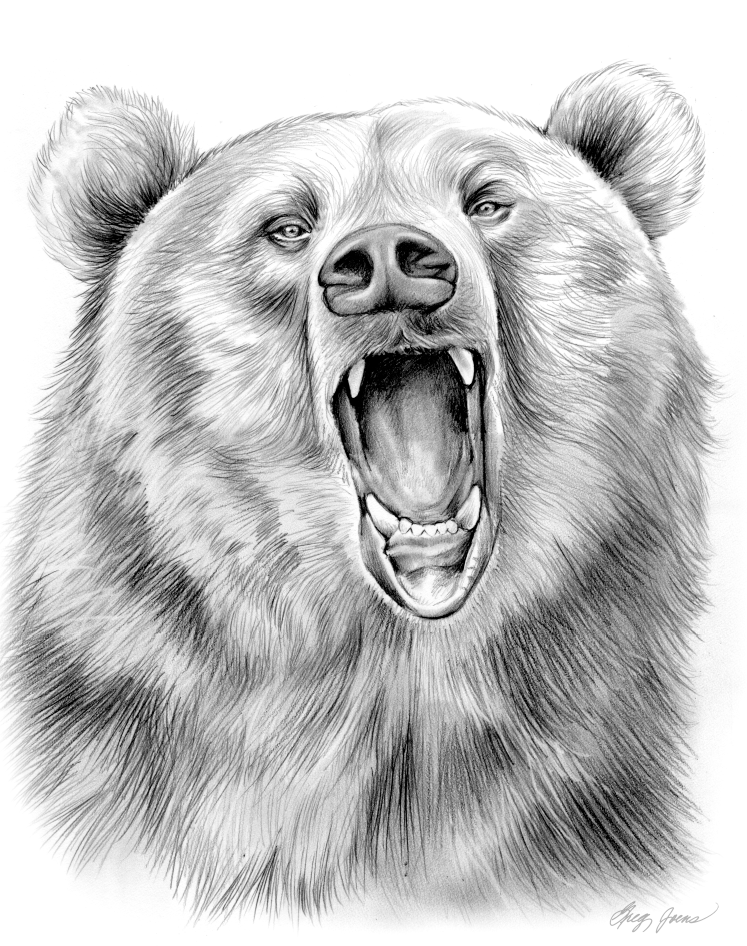 bear face drawing i like the face here but want looking forward instead of drawing face bear