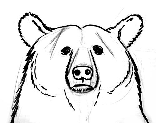 bear face drawing stock photo tatuajes she piola tatuajes de osos drawing bear face