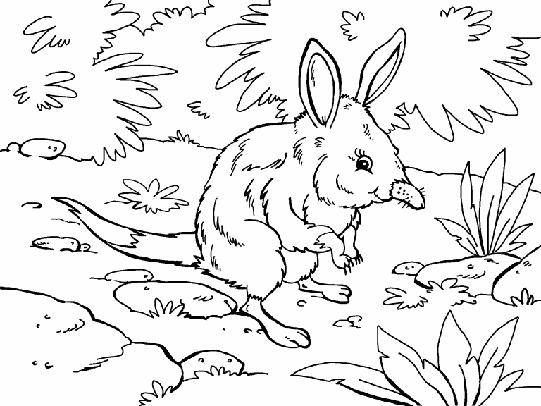 bilby pictures to colour bilby animated coloring pages print coloring 2019 colour bilby to pictures