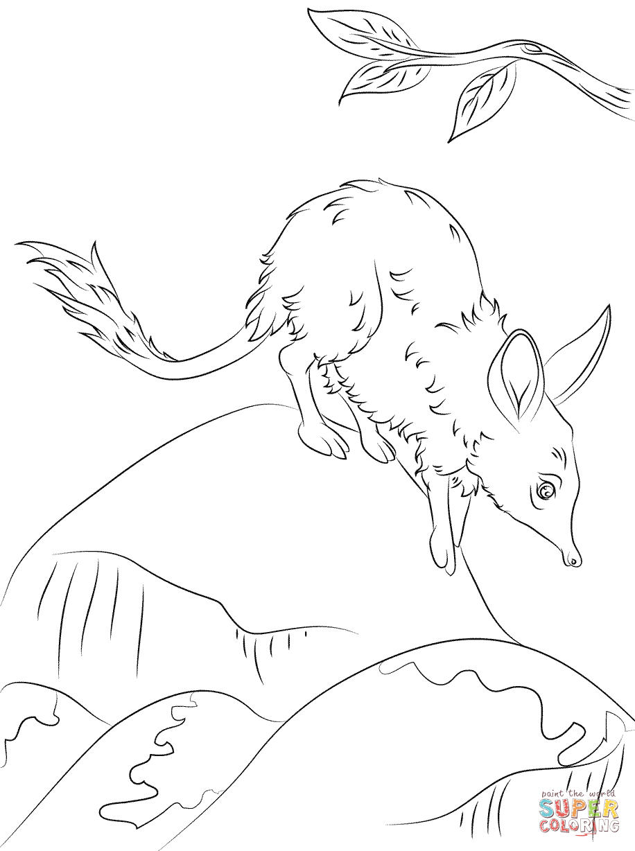 bilby pictures to colour bilby coloring page animals town animals color sheet pictures colour to bilby