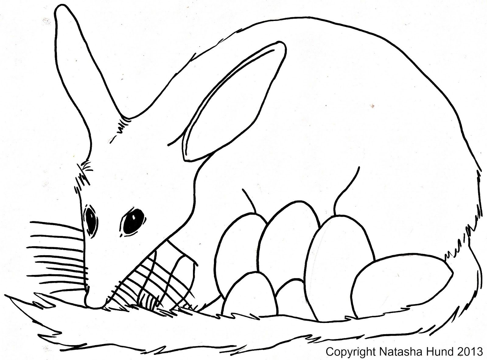 bilby pictures to colour bilby coloring page bilby free printable coloring pages colour bilby to pictures
