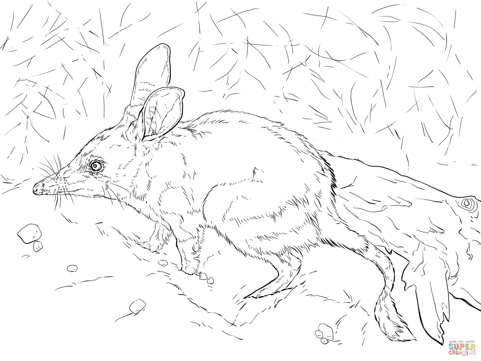 bilby pictures to colour bilby drawing coloring page printable bilby drawing to colour bilby pictures