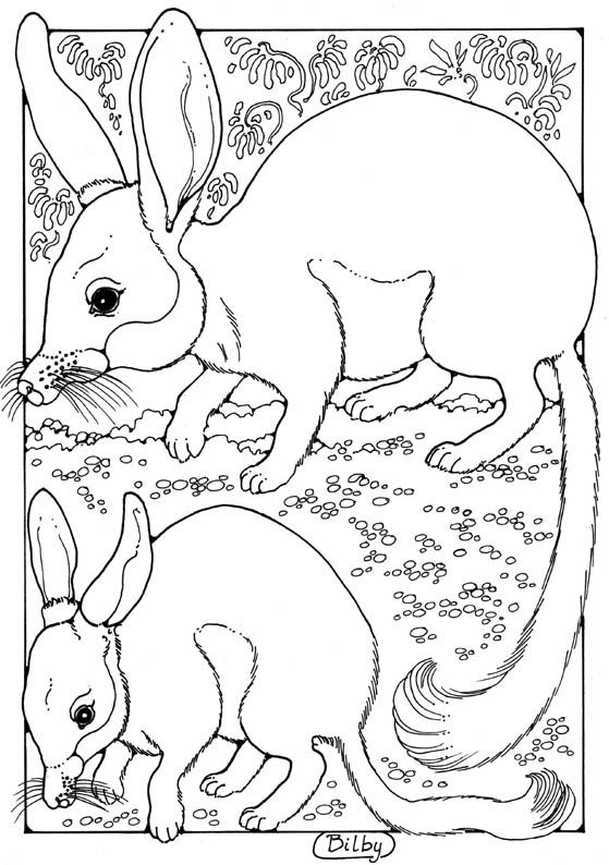 bilby pictures to colour bilby mom with bilby baby coloring page free printable colour to pictures bilby