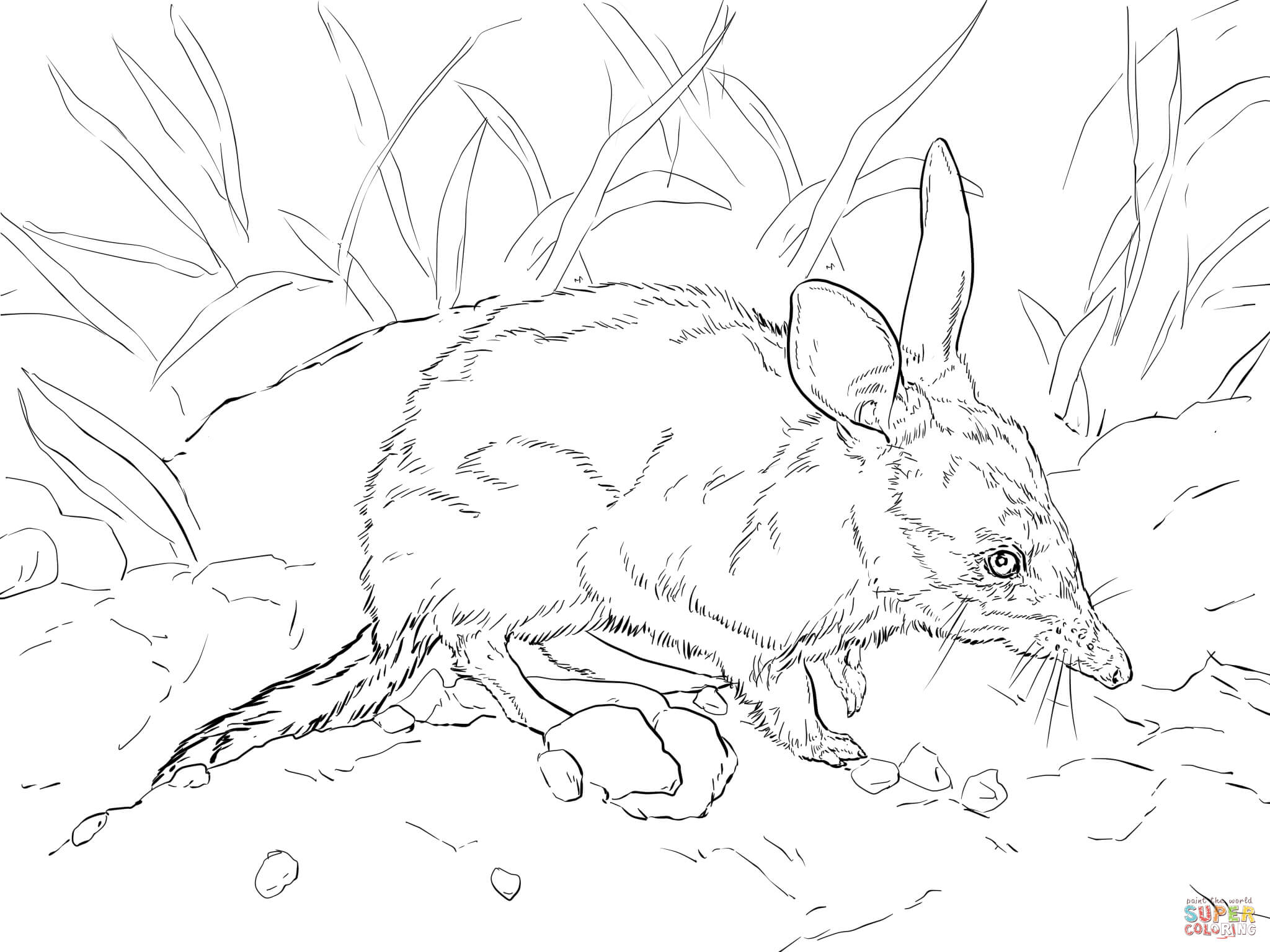 bilby pictures to colour cute greater bilby coloring page free printable coloring colour bilby pictures to
