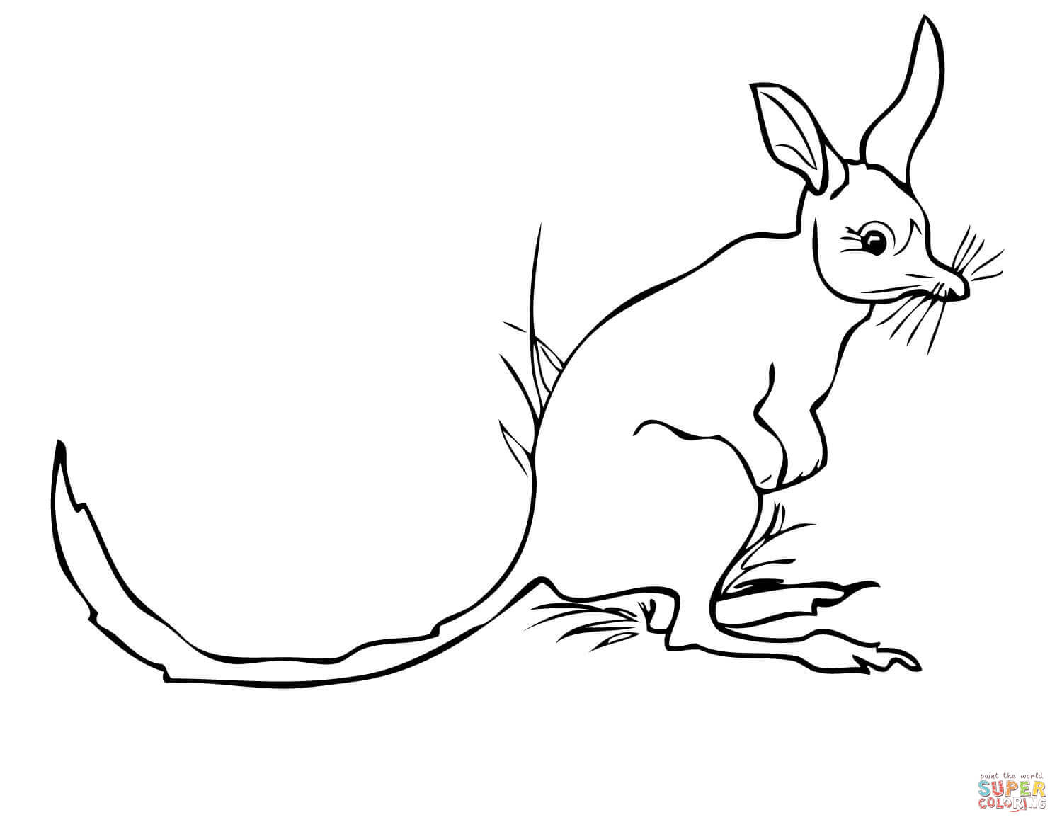 bilby pictures to colour desert coloring pages pictures bilby colour to