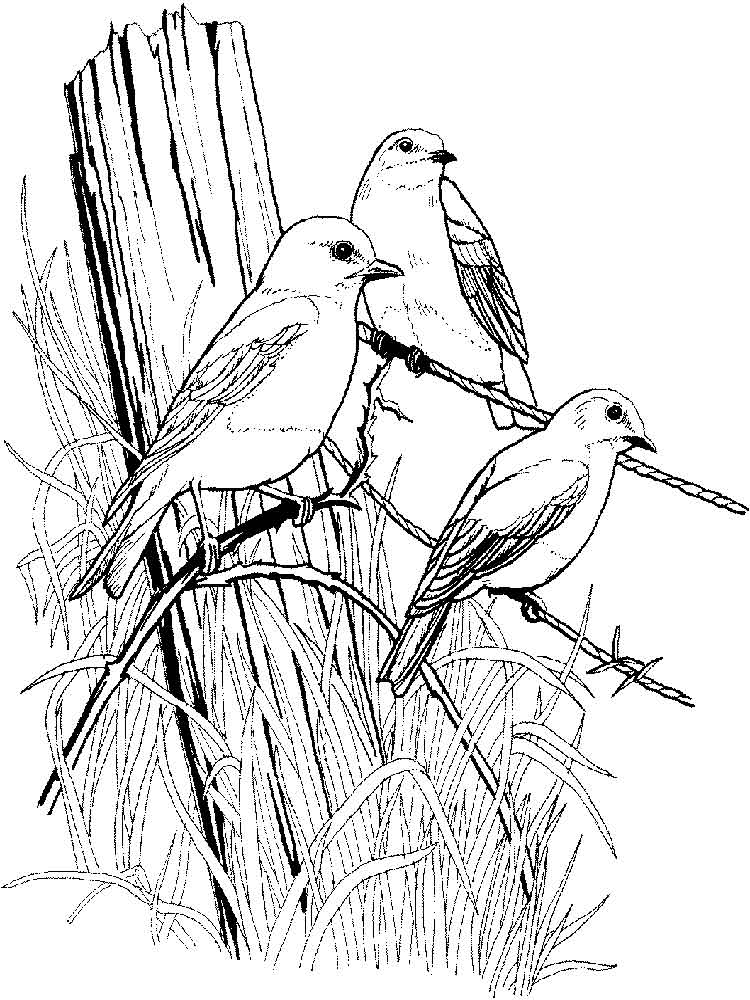 bird color pages bluebird coloring pages download and print bluebird bird pages color
