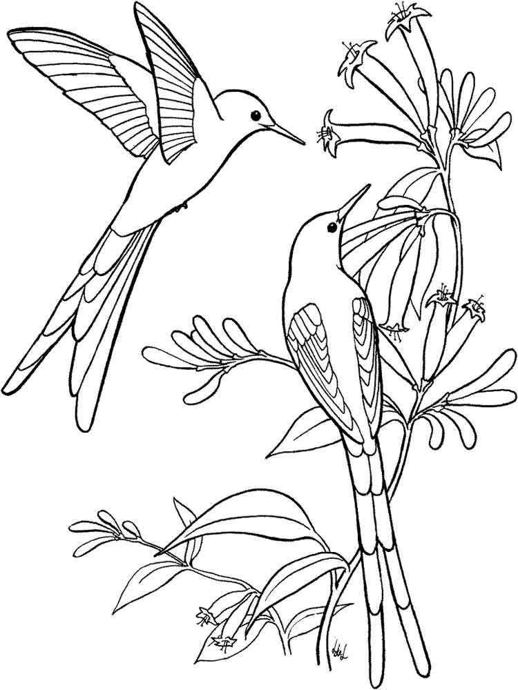 bird color pages hummingbird coloring pages download and print hummingbird color bird pages