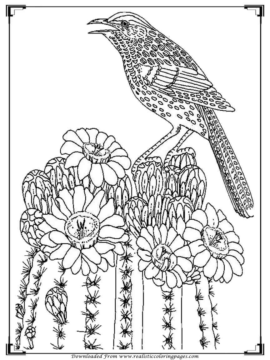 bird color pages printable birds coloring pages for adults realistic bird pages color