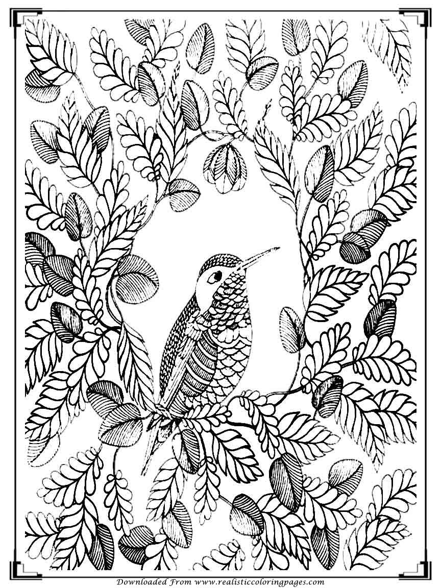 bird color pages printable birds coloring pages for adults realistic pages bird color
