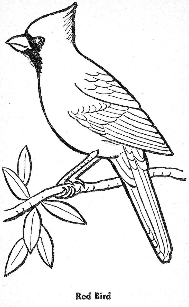 bird outlines bird patterns to trace coloring home outlines bird