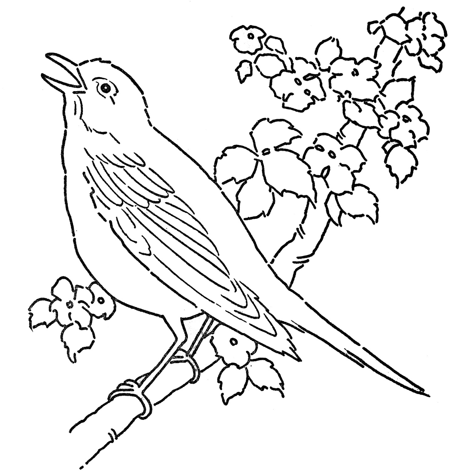bird printable coloring pages cute tweety bird coloring pages free printable cute bird coloring printable pages
