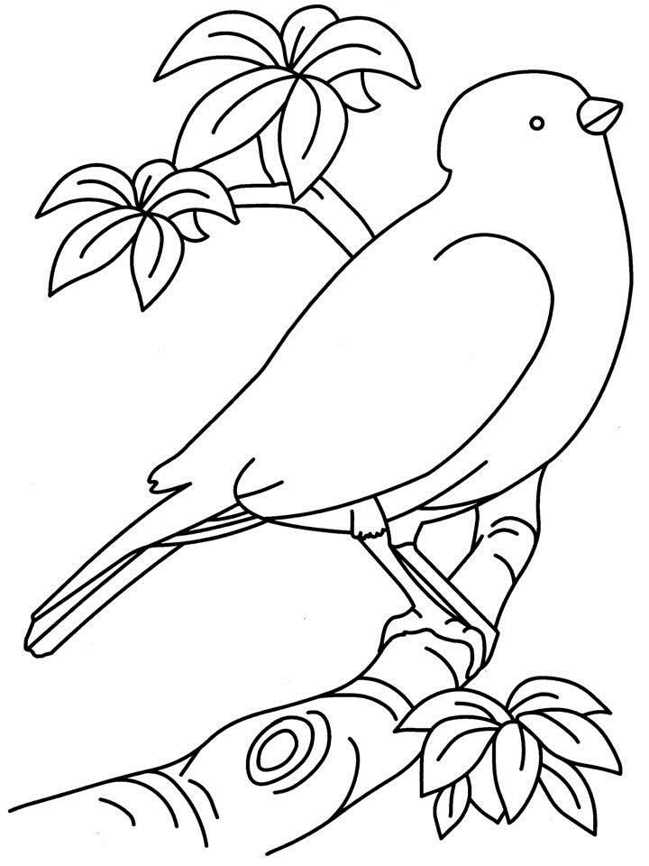 bird printable coloring pages free printable tweety bird coloring pages for kids printable bird pages coloring