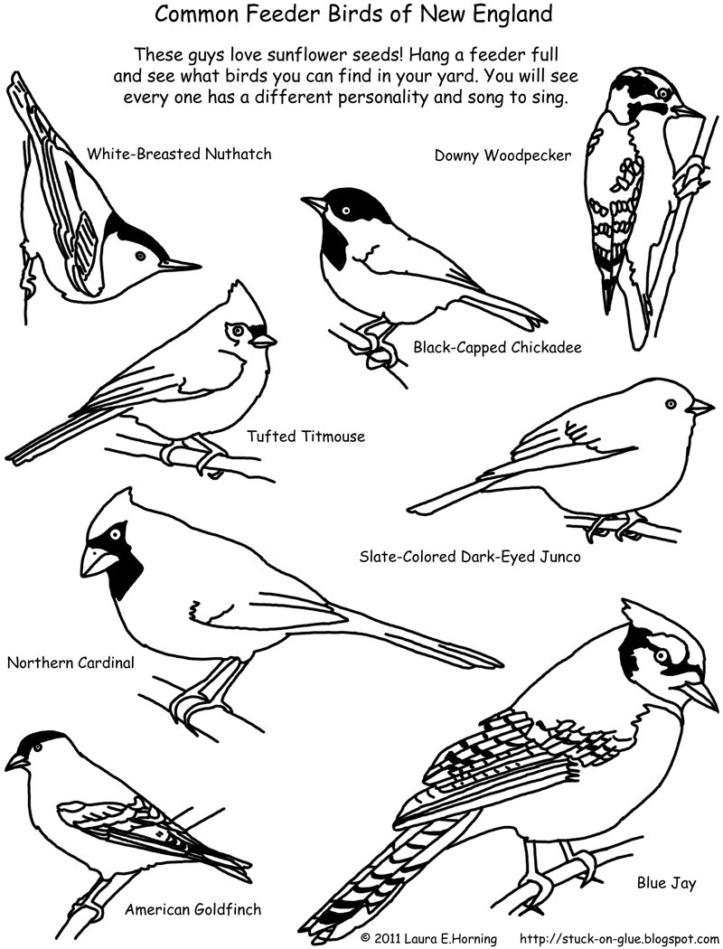 birds to colour and print bird coloring pages free printable realistic and to birds print colour
