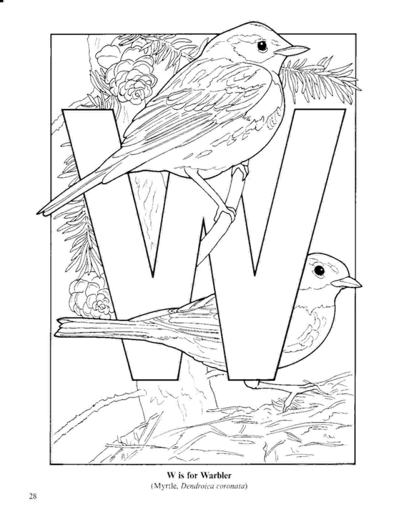 birds to colour and print blue bird cartoon az coloring pages stiching bird birds print and to colour