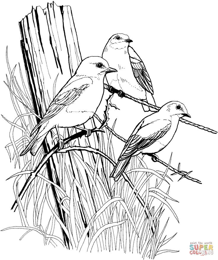 birds to colour and print colouring page birds google search bird drawings bird colour and print to birds