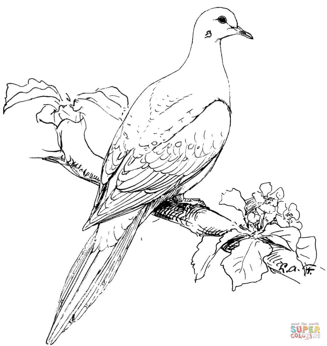 birds to colour and print free printable parrot coloring pages for kids print and to birds colour