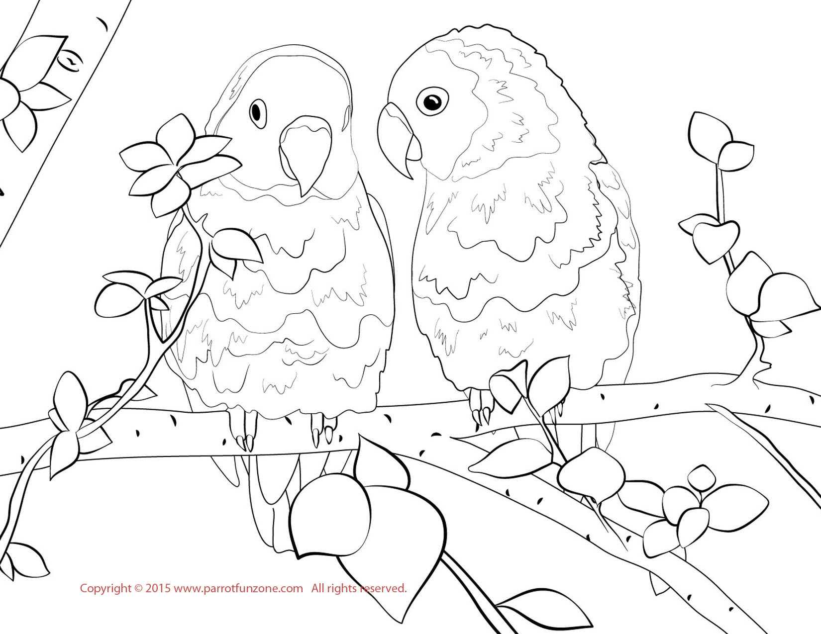 birds to colour and print hummingbird coloring pages to download and print for free colour print birds and to