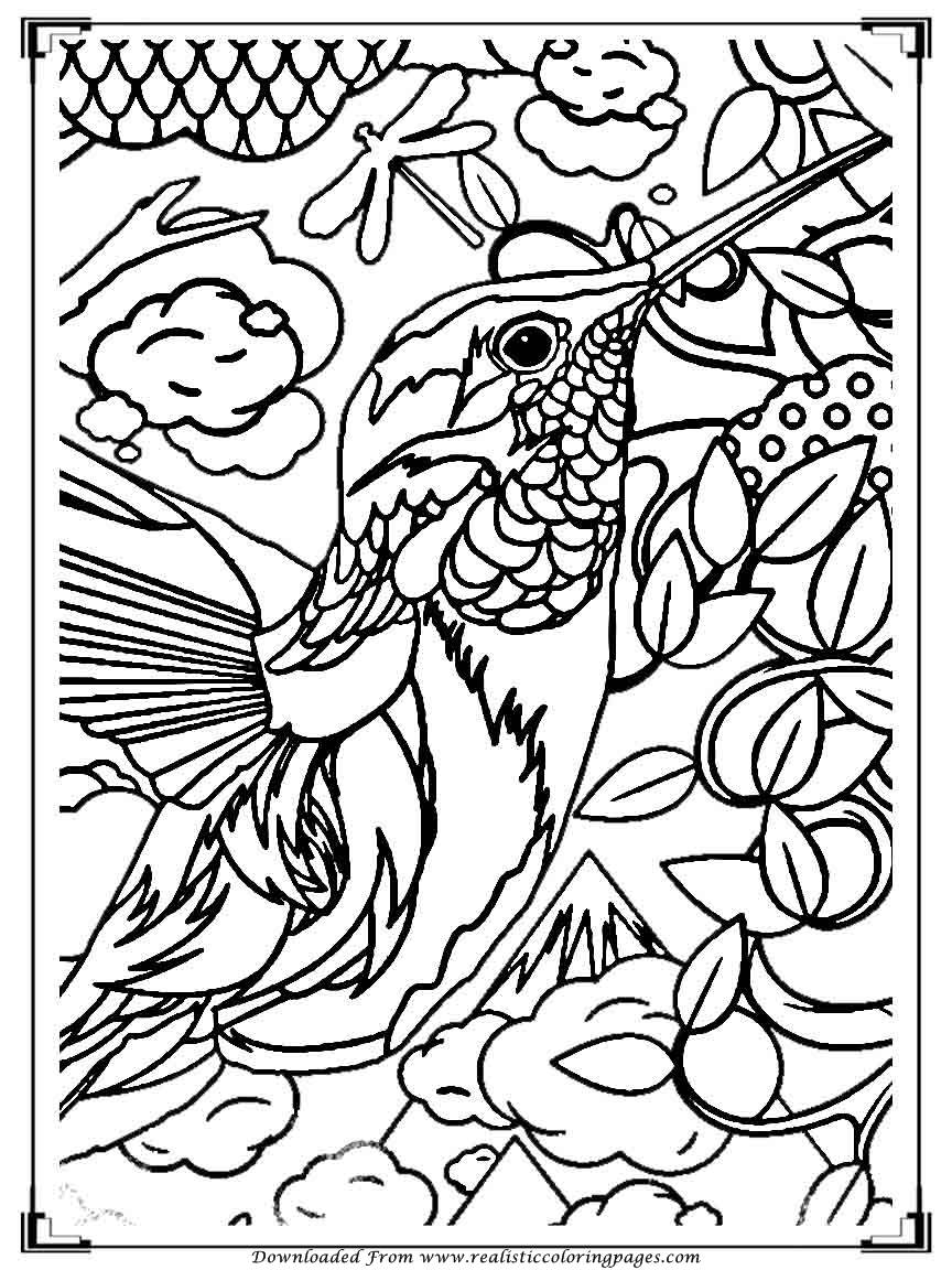 birds to colour and print printable birds coloring pages for adults realistic birds to and colour print