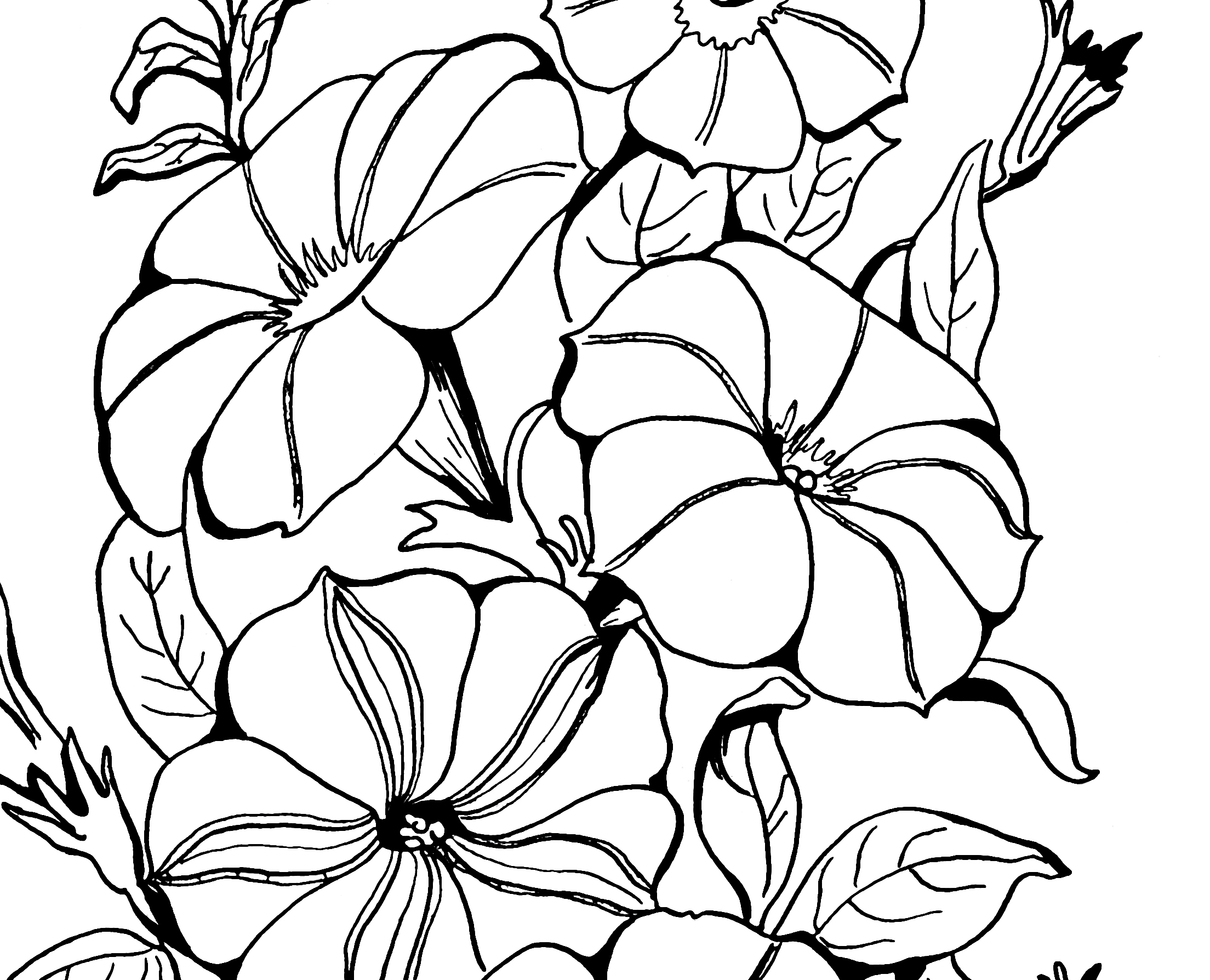 black and white coloring pages for adults 23 best images about abstract coloring pages on pinterest coloring white for adults pages and black