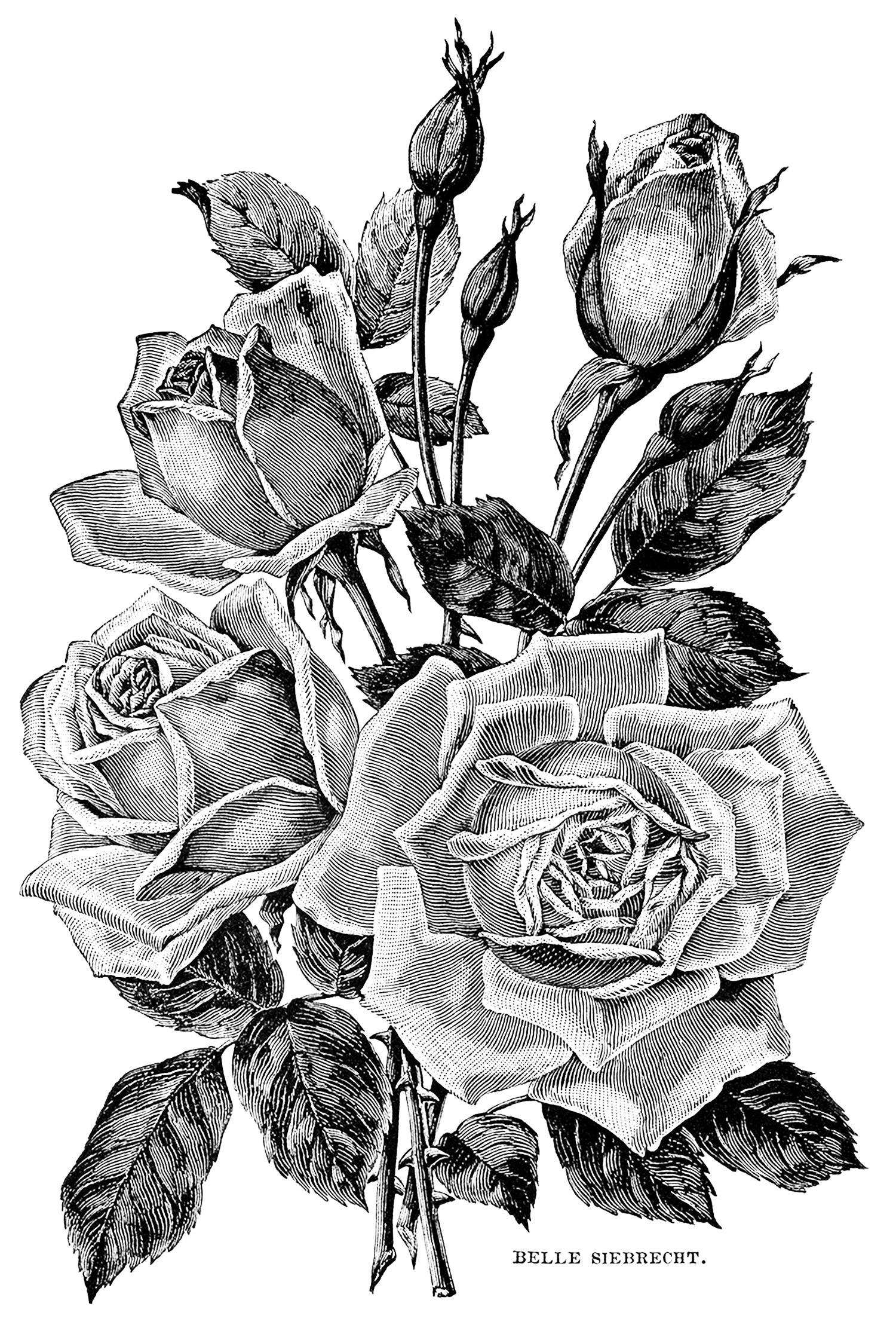 black and white coloring pages for adults paisley coloring page white coloring black for adults pages and