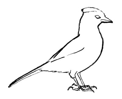 blue jay outline bird to color blue jay coloring page free blue jay jay blue outline