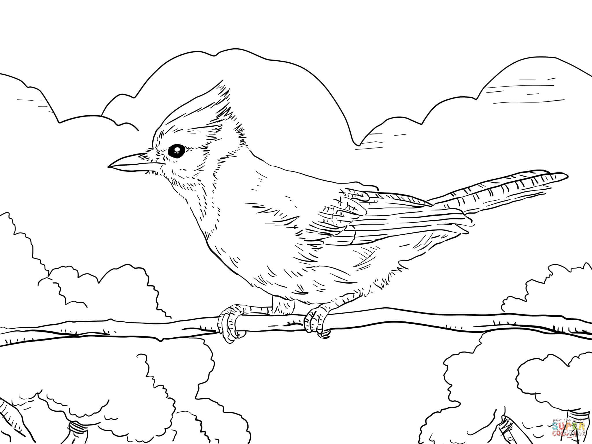 blue jay outline blue jay coloring page free printable coloring pages blue jay outline
