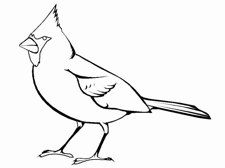 blue jay outline blue jay coloring page inspirational cardinal bird blue jay outline