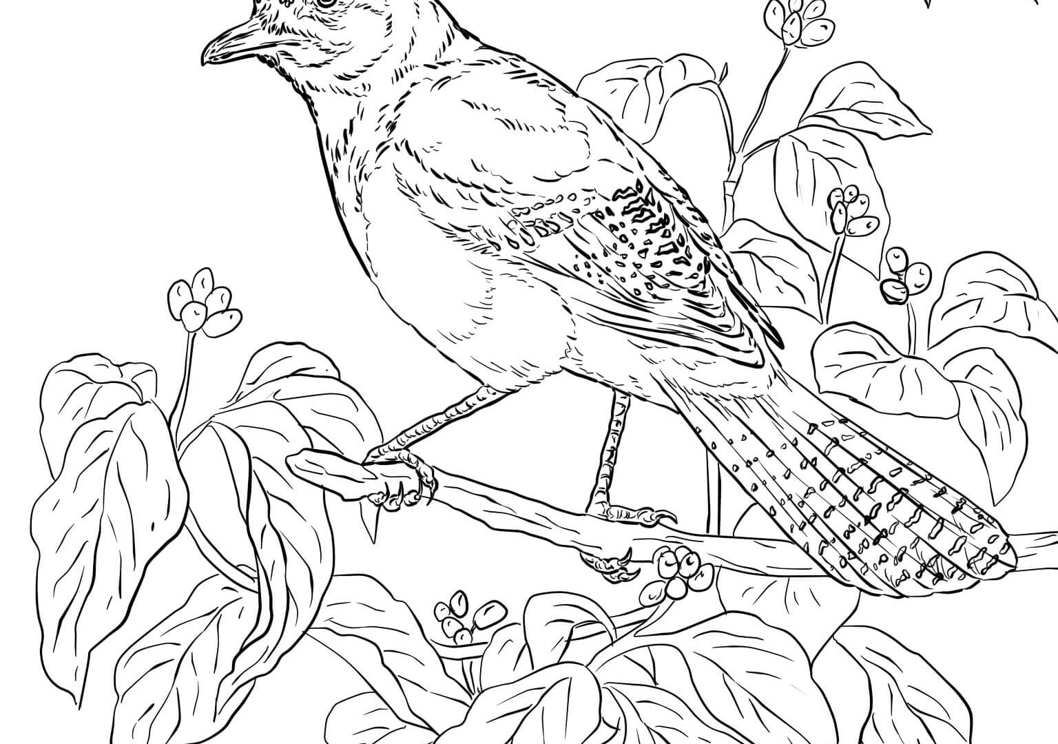 blue jay outline learn how to draw a blue jay birds step by step outline blue jay