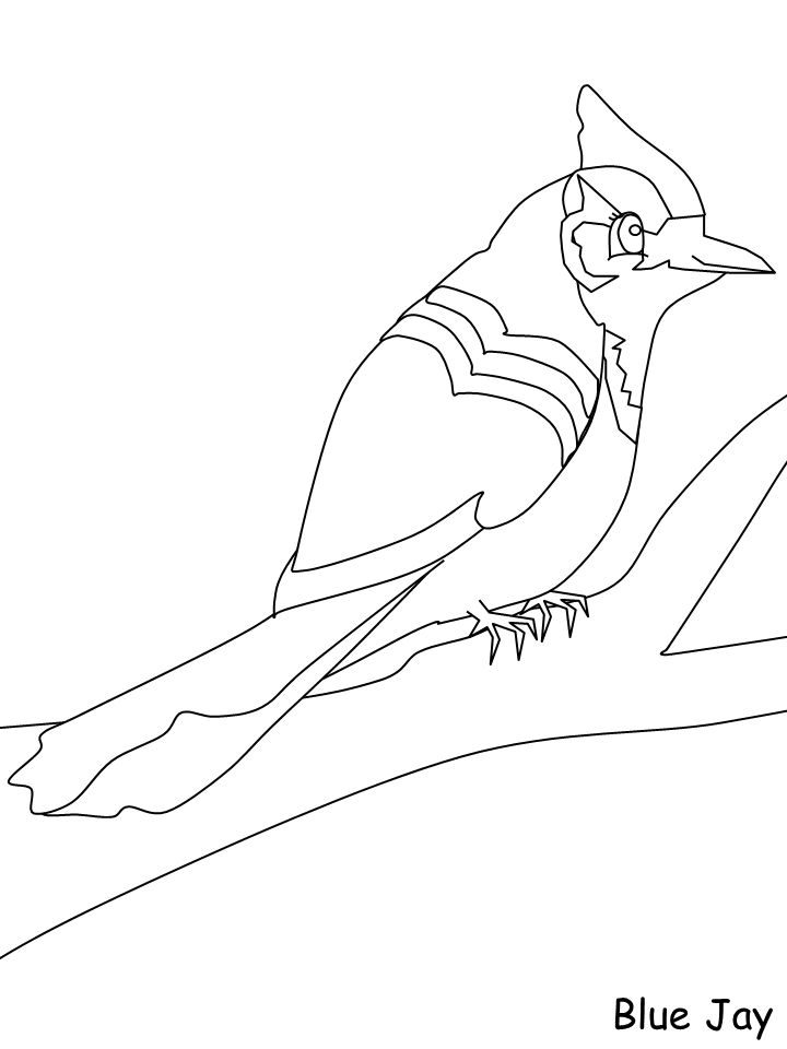 blue jay outline simple blue jay coloring page coloring pages blue outline jay
