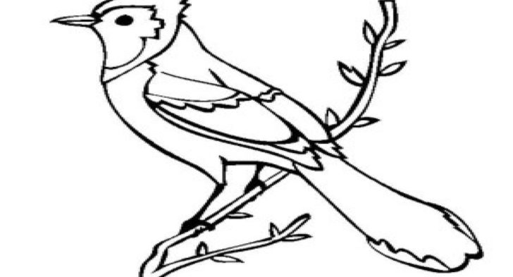 blue jay outline sorcerer mickey coloring pages print coloring 2019 blue jay outline