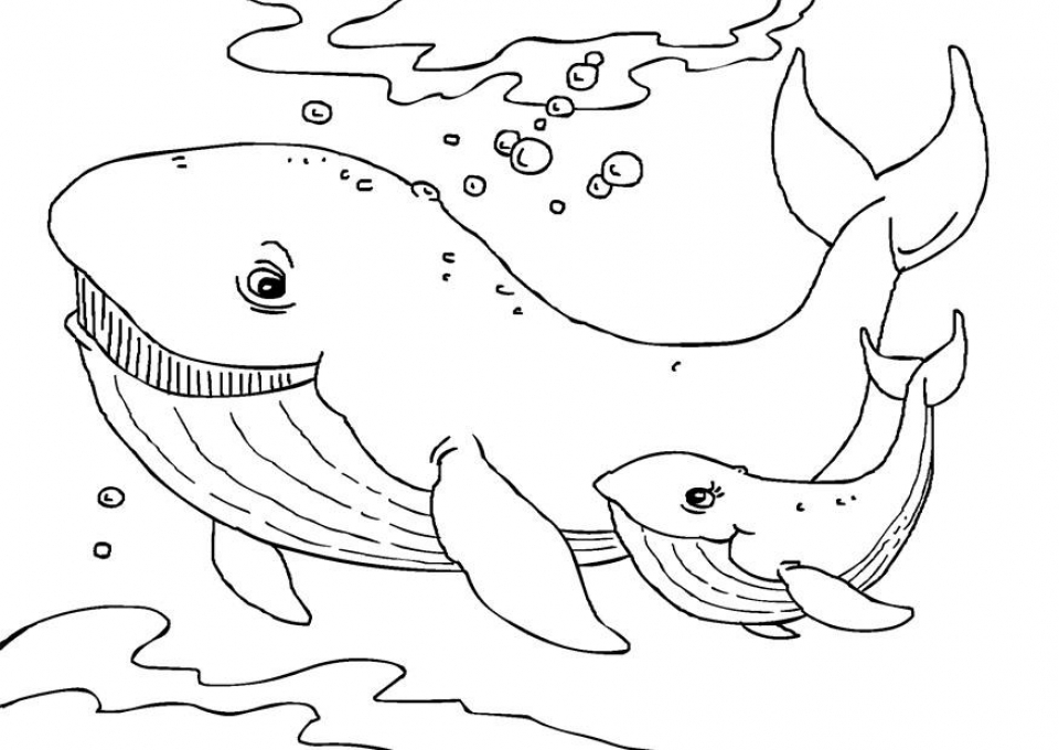 blue whale coloring page download blue whale coloring for free designlooter 2020 whale blue page coloring