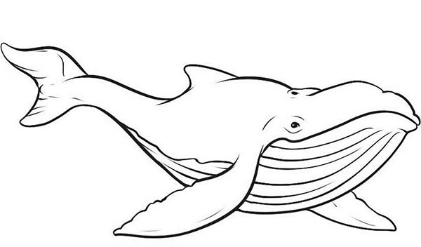 blue whale coloring page free whale coloring pages whale coloring page blue