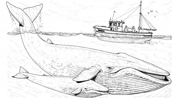 boat trailer coloring pages fishing boat over two blue whale coloring page whale boat pages coloring trailer