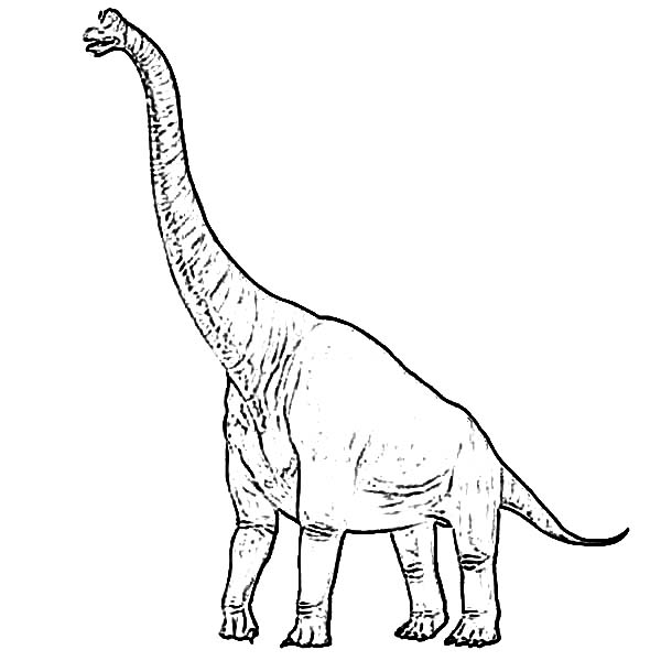 brachiosaurus drawing how to draw a brachiosaurus step by step drawing tutorials brachiosaurus drawing
