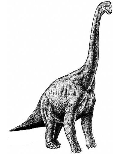 brachiosaurus drawing sharples designs research dinosaurs and size difference drawing brachiosaurus