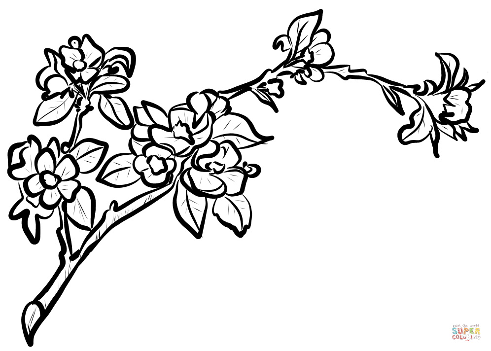 branch coloring page download branch coloring for free designlooter 2020 coloring branch page